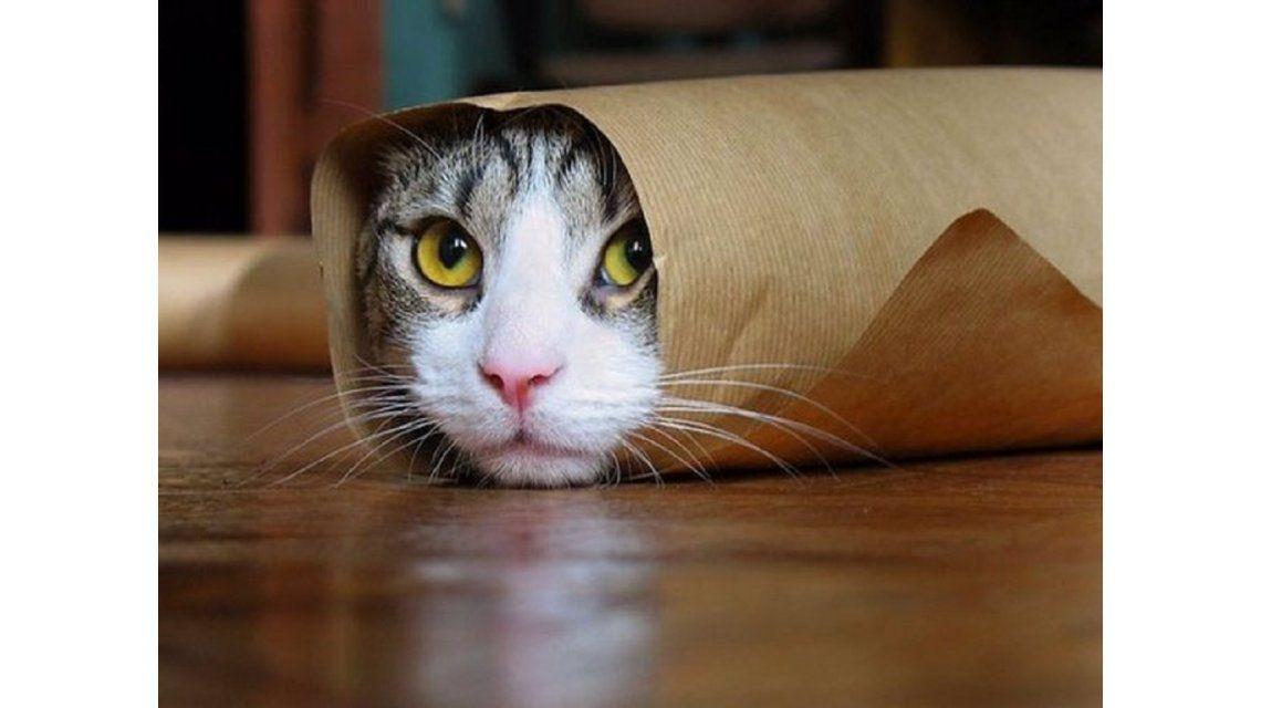Confirmado: los videos de gatitos son adictivos, pero buenos para la salud