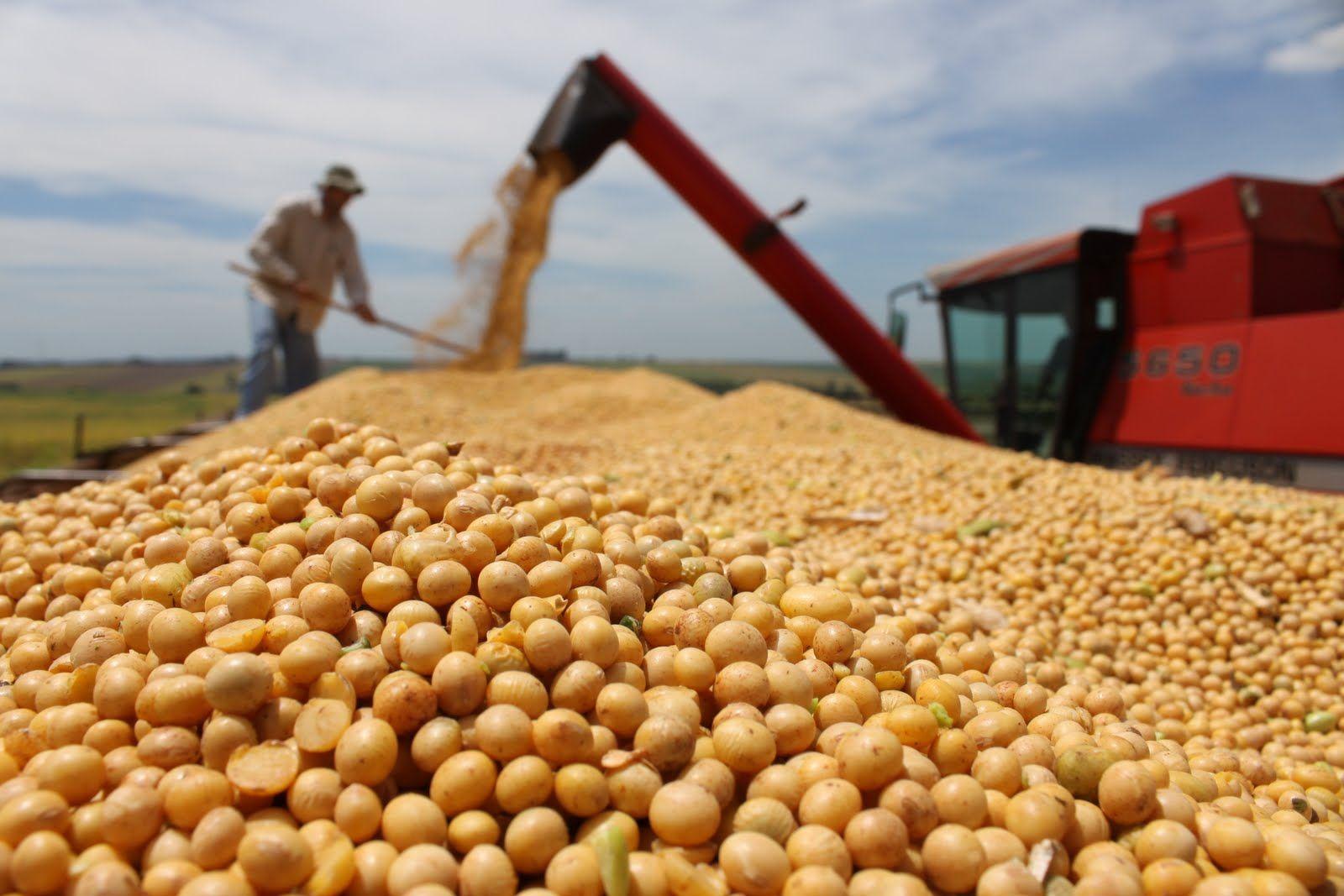 En busca de dólares, nuevo plazo del Gobierno para que los sojeros liquiden más