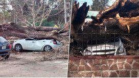 Por segundos, intendente cordobés se salvó de ser aplastado por un árbol