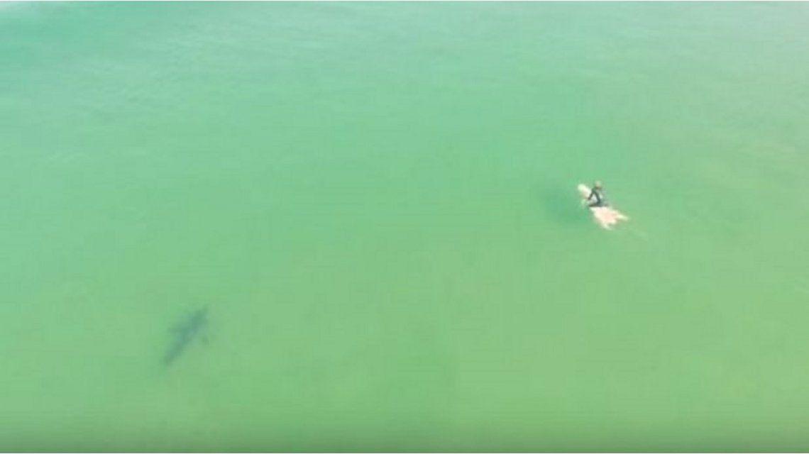 Alerta tiburones: drone captó como los tiburones de acercan a los surfistas