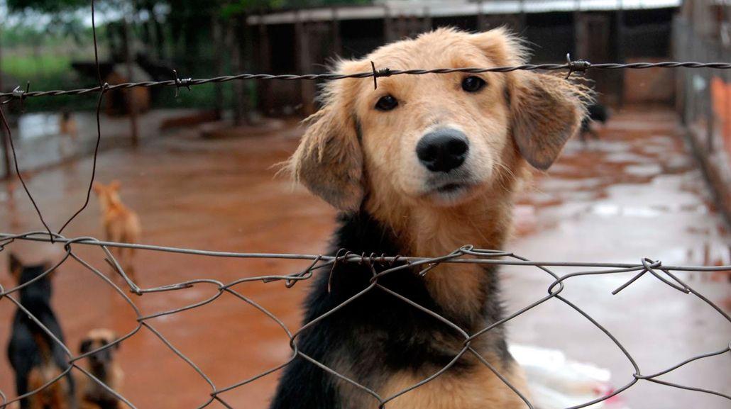 Proponen multas y prisión efectiva para quienes maltraten animales