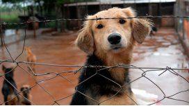 Maltrato animal: proponen multas y prisión efectiva