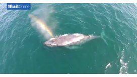 Descuben a una ballena que crea arcoíris