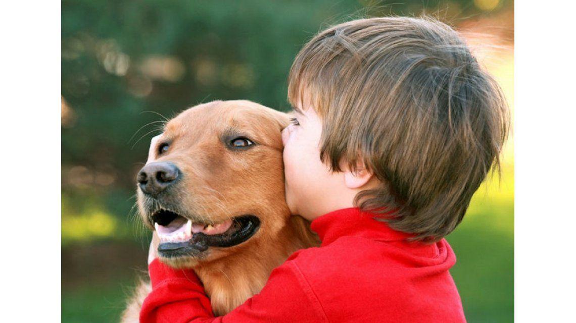 ¿Querés cuidar a tu mascota? Lanzaron un seguro para perros y gatos