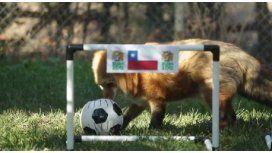 La Copa América ya tiene su pulpo Paul: un zorro chileno