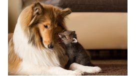 Una perra adopta a un zorro huérfano encuentra su nueva madre en una perra
