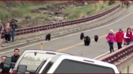 Paseaban por un parque y se toparon con osos osos