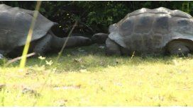 Esto pasa por interrumpir cita entre tortugas