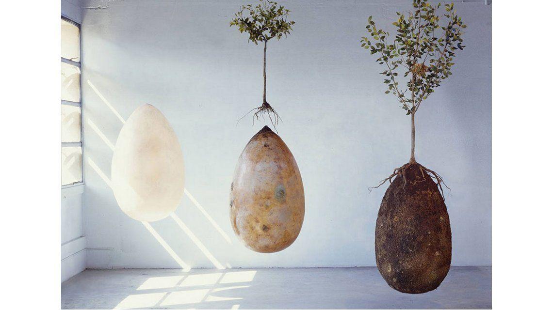 Una nueva forma de entierro convierte a los fallecidos en árboles