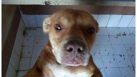 La perra que atacó a un animal sería adoptada en los próximos días