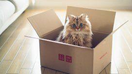 ¿Por qué los gatos adoran las cajas?