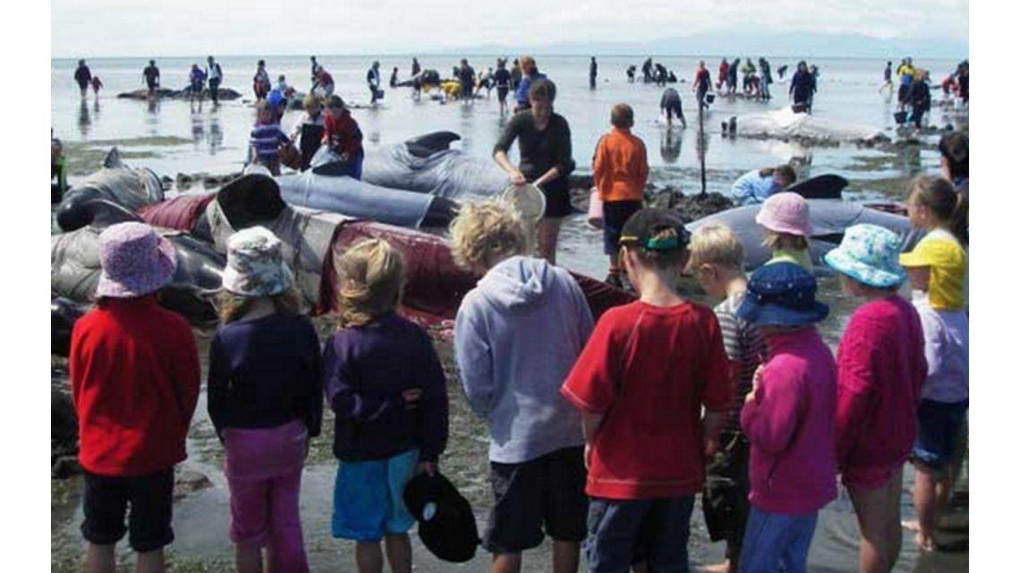 Unas 200 Ballenas Quedaron Varadas En Las Costas De Nueva Zelanda