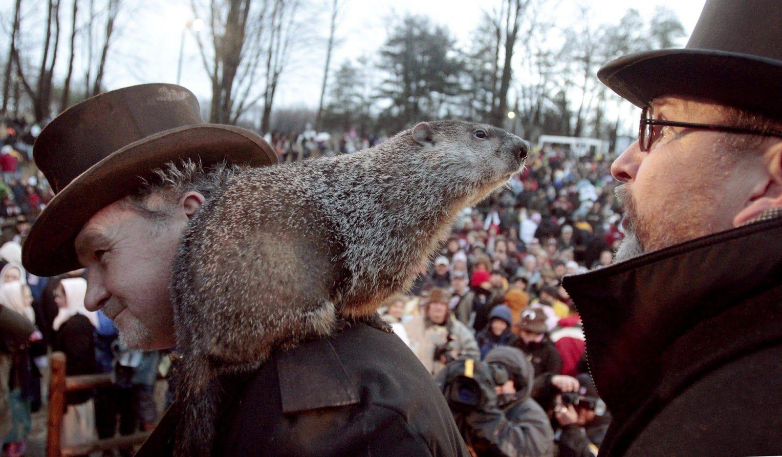 Hoy es el Día de la Marmota: llegó el meteorólogo más curioso del mundo