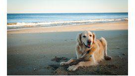 ¿Cómo cuidar a las mascotas en la playa?