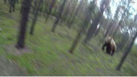 ¿Es real? En bici, escapa por su vida de un oso