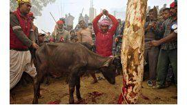 Prohíben en Nepal la matanza de animales en una ceremonia religiosa