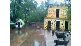 Un refugio de animales quedó bajo el agua