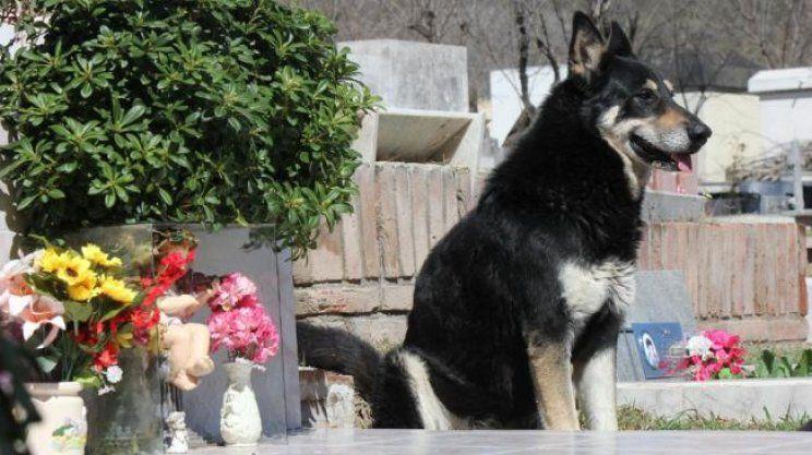 Un perro cumplió 10 años de guardia junto a la tumba de su dueño