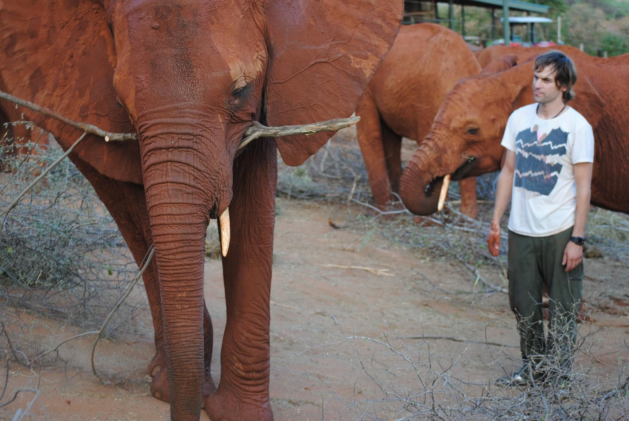 La historia del veterinario argentino que dejó todo para curar elefantes en África