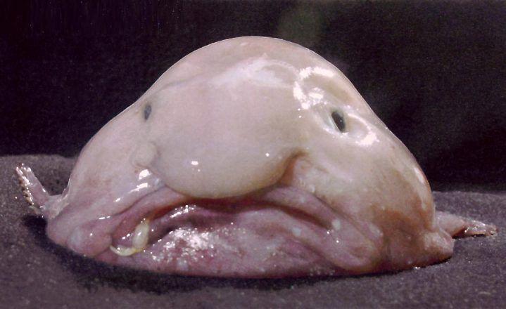 Un pez particularmente asqueroso