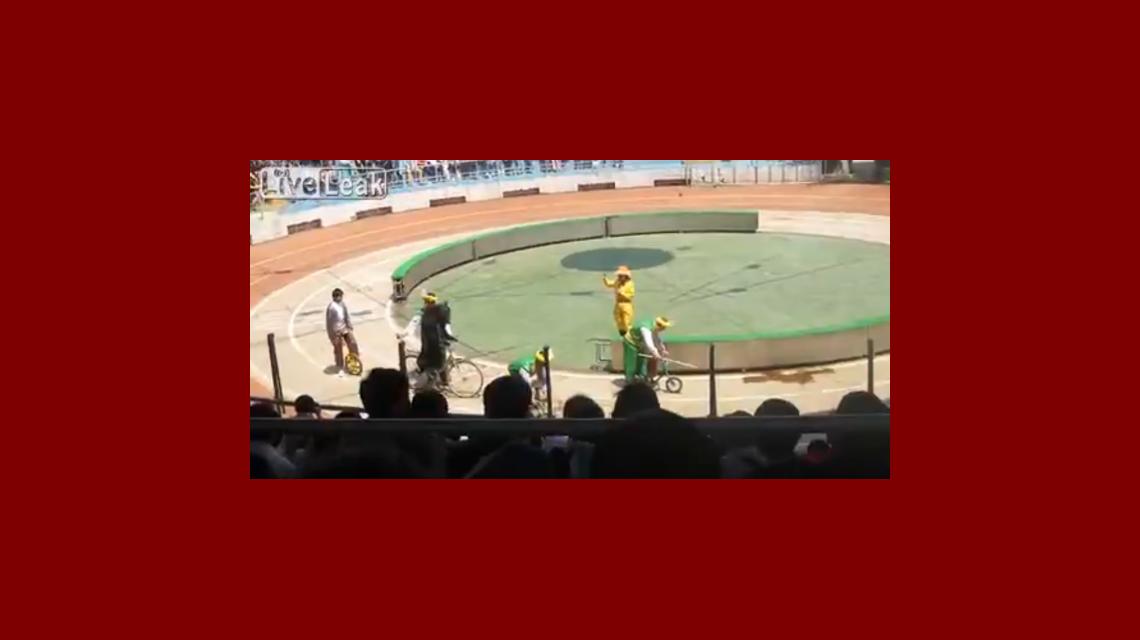 Graban en video a un oso que se comió a un pequeño mono en un circo
