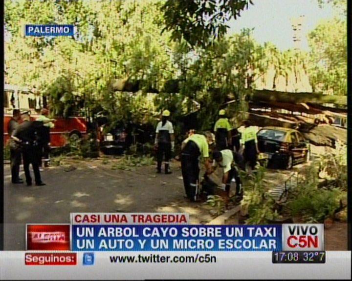 Un árbol aplastó un taxi, un auto y un micro escolar: no hay heridos