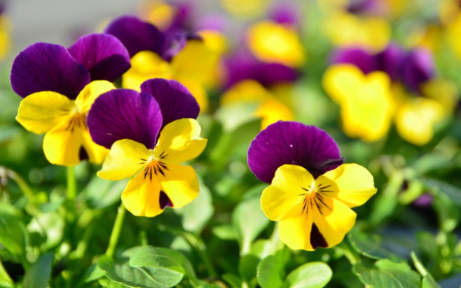 Una investigación reveló cómo fue la primer flor