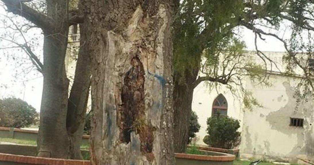 Conmoción en Córdoba por la aparición de la Virgen en un árbol