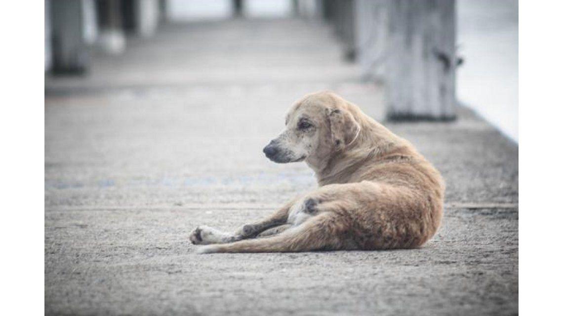 Se celebra el Día mundial del perro callejero