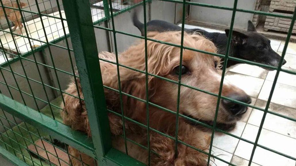 Crimen de la proteccionista: piden ayuda para rescatar a los animales de la víctima