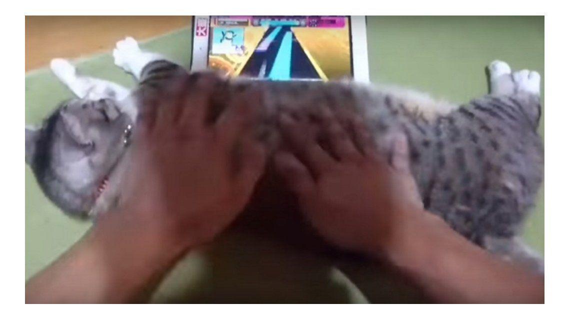 Usa al gato como joystick