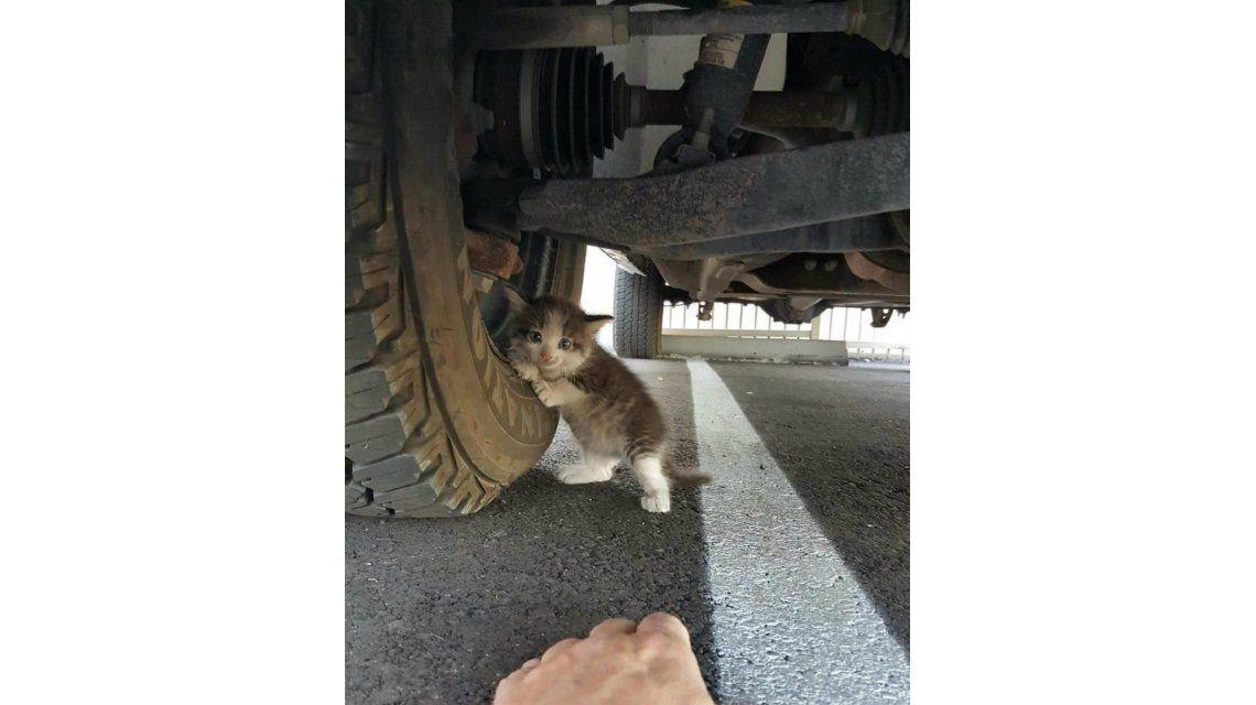 Una persona encontró a este gatito en apuros