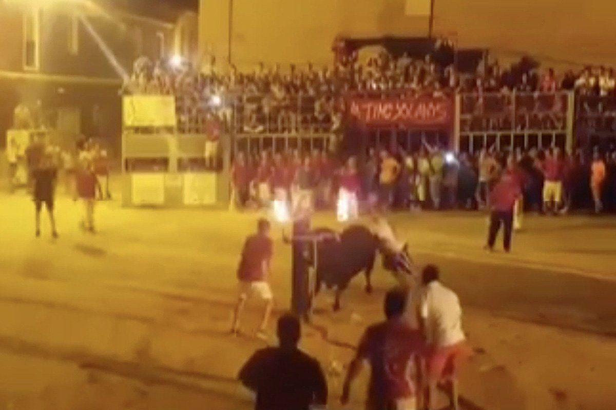 Un toro se mató cuando le prendieron fuego los cuernos