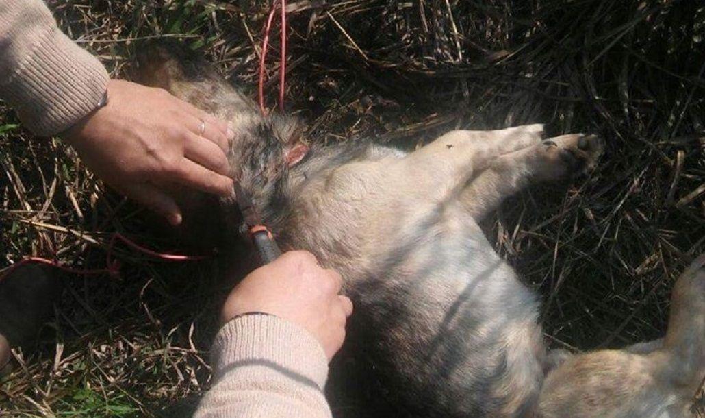 Así rescataban al perro al que intentaron ahorcar