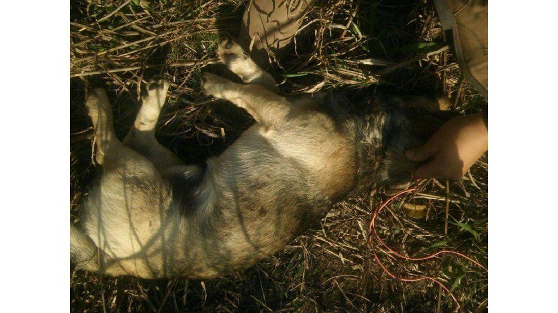 Así fue rescatado el animal atacado cobardemente