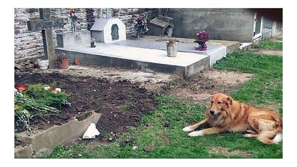 Firulais junto a la tumba de sus dueños