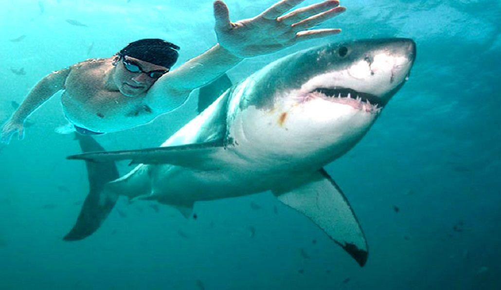 ¿Quién gana en una carrera entre un tiburón y Michael Phelps?