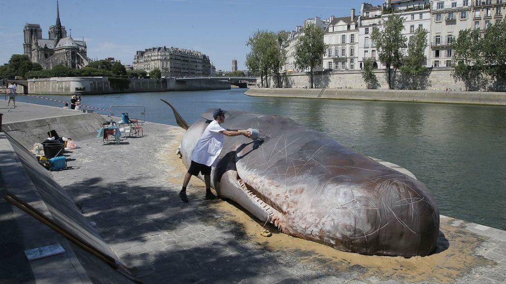 Sorpresa por una ballena encallada en París