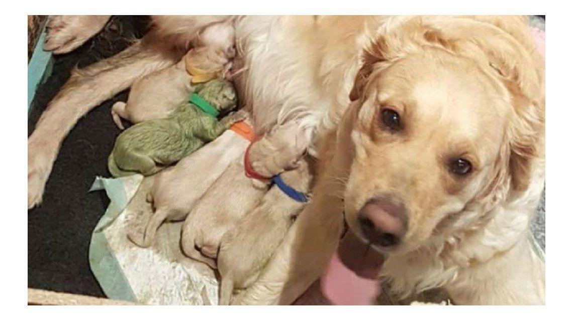 Nació un cachorro de color verde