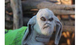 Éste es el cabrito con rostro humano que conmocionó a San Luis