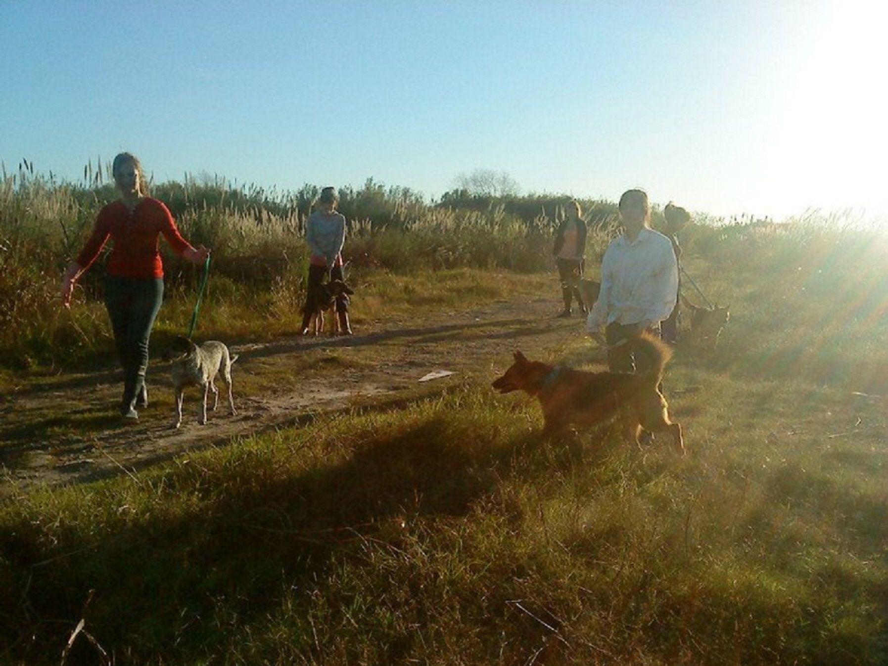 Quieren cerrar un refugio que alberga 200 perros en Tres de Febrero
