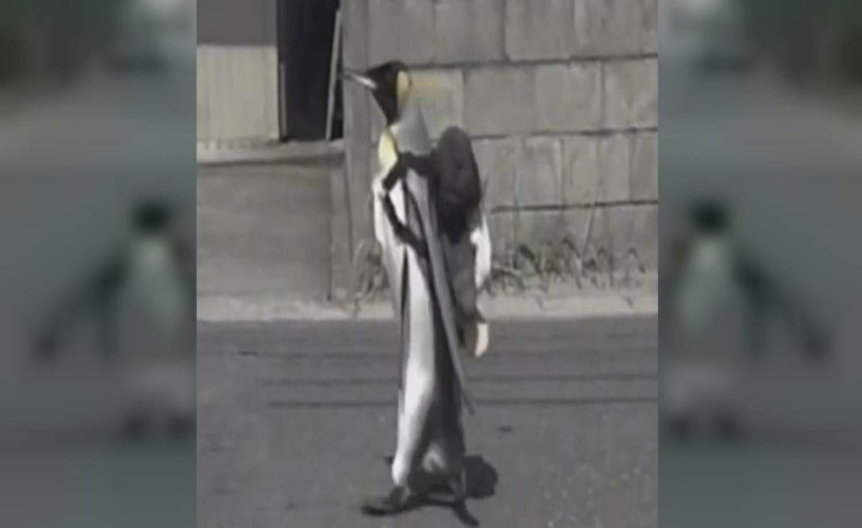 Porqué la pingüina Lala es furor en Japón