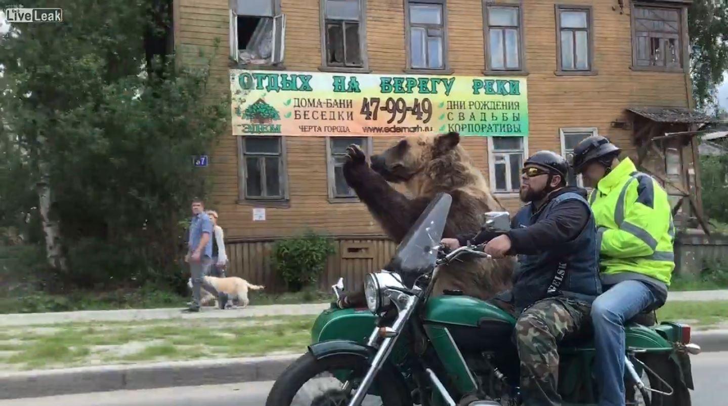 Un oso en moto es furor en Rusia