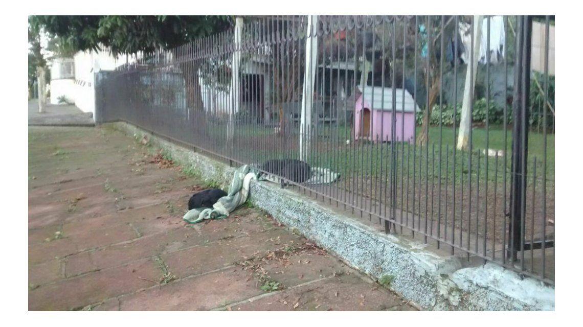 La cachorra no dejó desamparado a su amigo