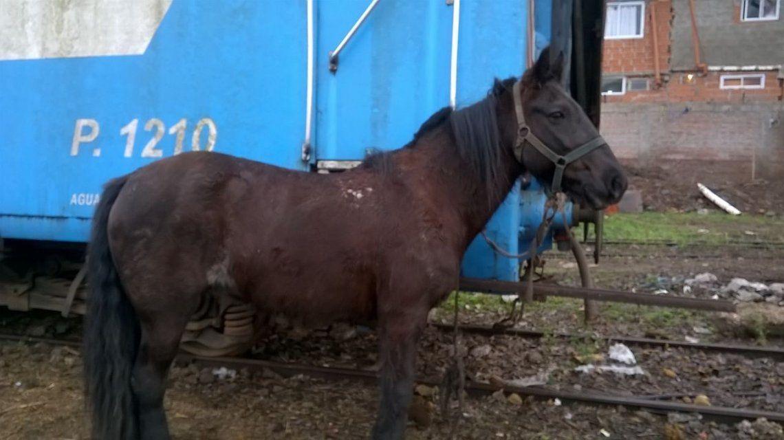 Rescataron seis caballos