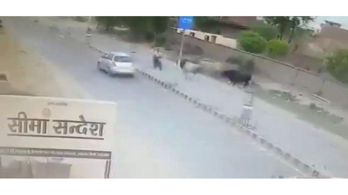 Un toro lo embistió cuando andaba en moto por una calle de India