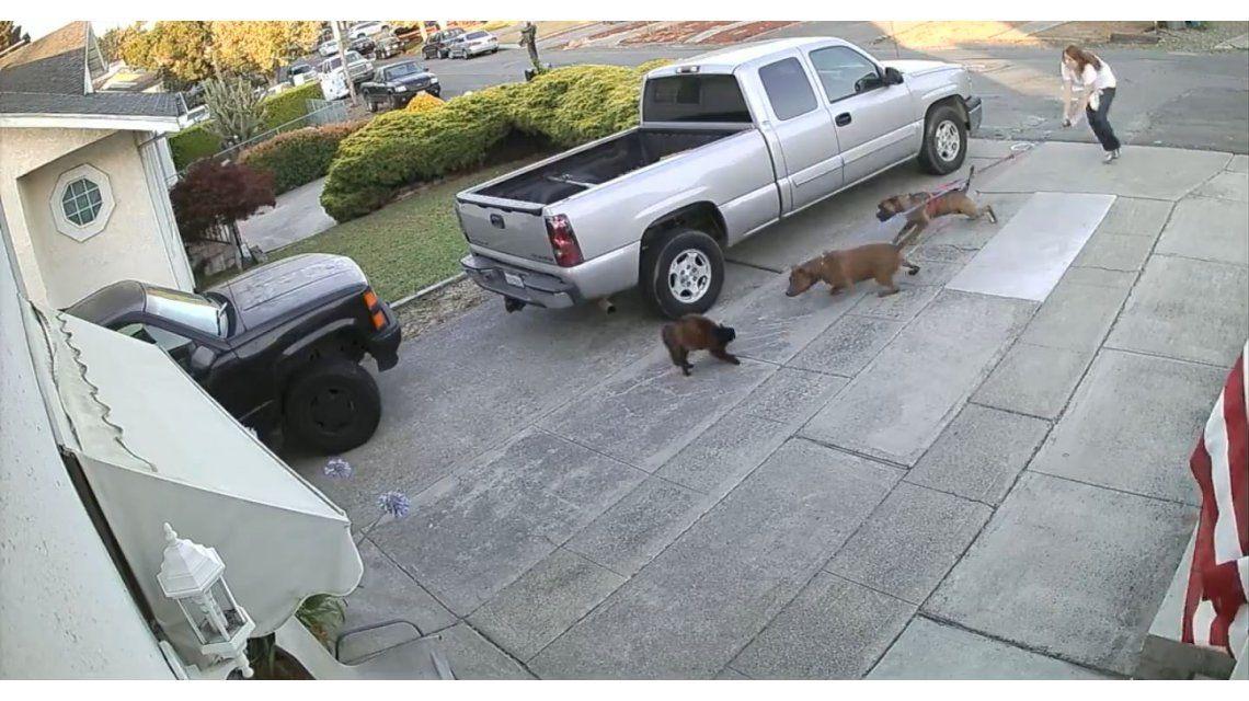 Un gato es atacado brutalmente por dos pitbulls