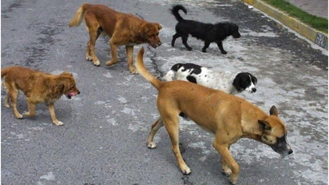 Neuquén: quienes adopten perros de la calle podrían pagar menos impuestos