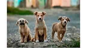 Las personas que adopten perros de la calle podrían pagar menos impuestos