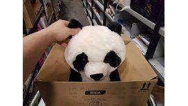 La conmovedora carta de un nene que quería un panda de peluche